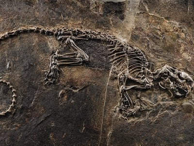 A time capsule of life in the Eocene: Ailuravus, a three-foot-long, squirrel-like rodent