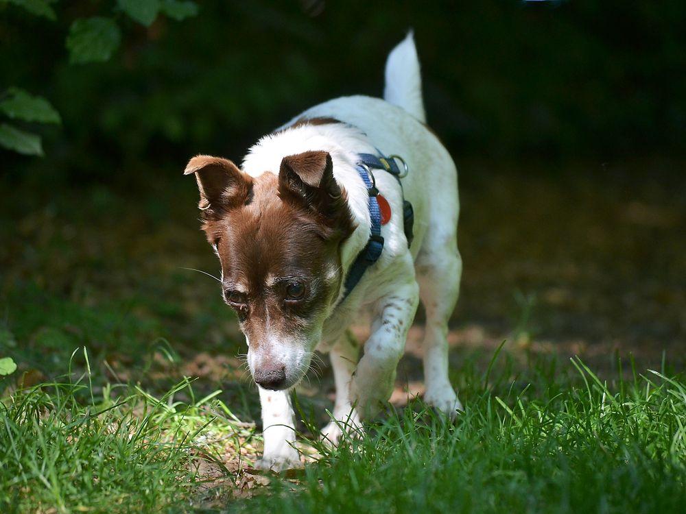 dogs-2516398_1920.jpg
