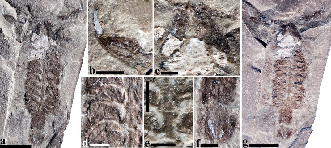 World's Oldest Scorpions May Have Moved From Sea to Land 437 Million Years Ago