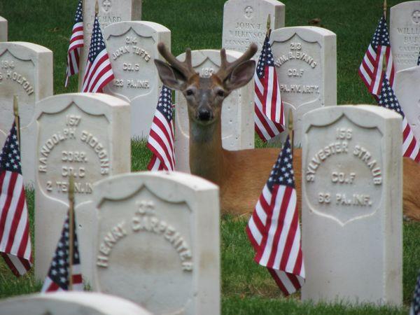 Memorial Day thumbnail