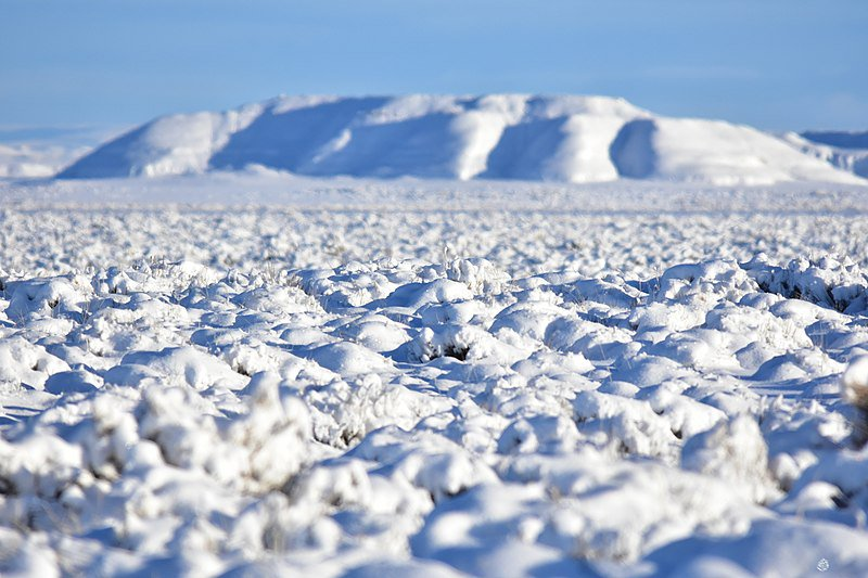 Cold Steppe