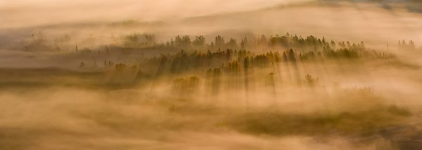 Sunrise Fog with Shadows thumbnail