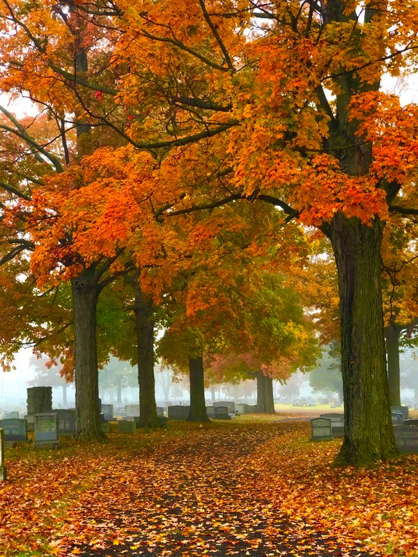 Fall colors in a cemetery thumbnail