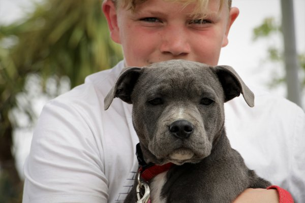 Boy with the dog thumbnail
