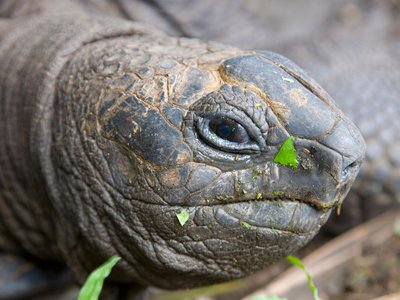 Unsurprisingly, some giant tortoises take issue with humans trying to watch them breed.