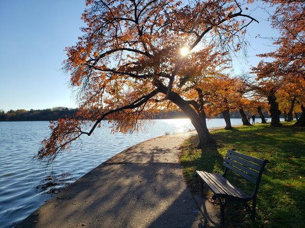 Tidal Basin Washington DC in Fall thumbnail