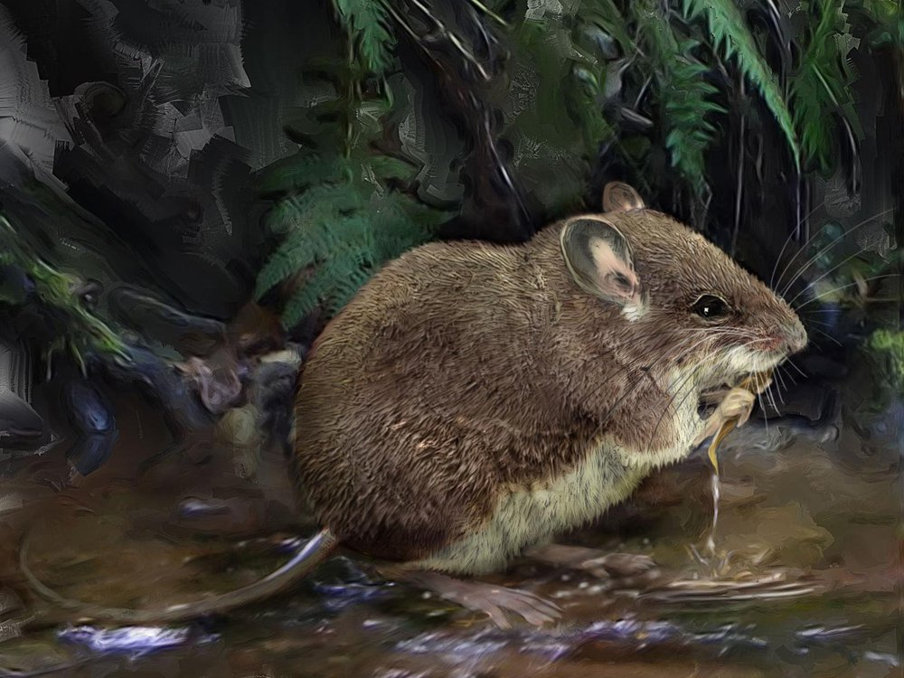 An illustration of a stilt mouse standing on the edge of a river and hunting