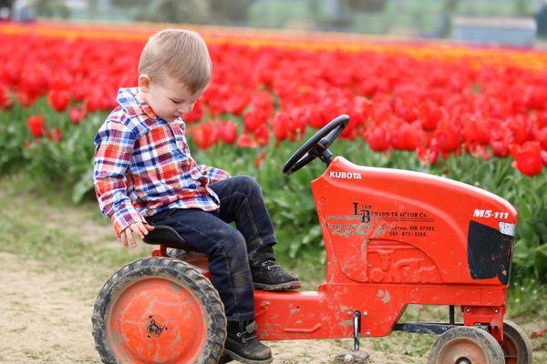 Mason on a tractor at a tulip farm thumbnail
