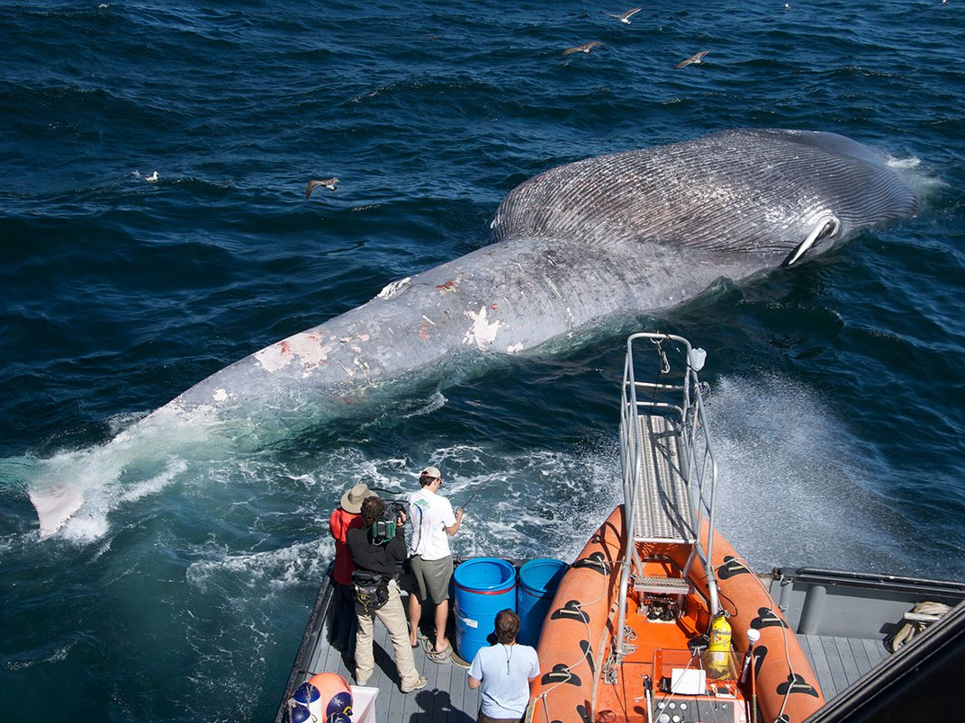 Innovative New Whale Detection System Aims to Prevent Ships From Striking Animals