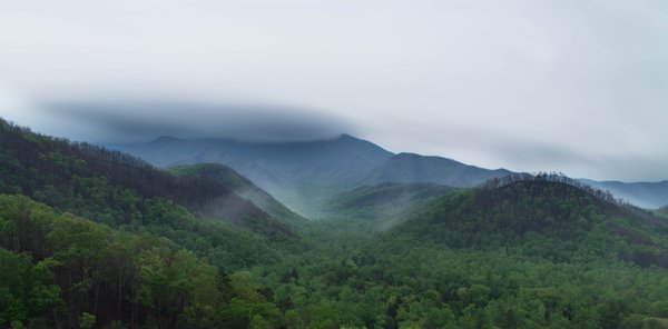 Misty Day in the Smokies thumbnail