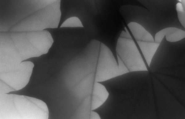 Maple pattern 1 thumbnail