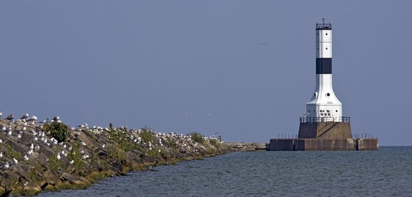 Gulls roosting near the Conneaut West Breakwater Lighthouse thumbnail