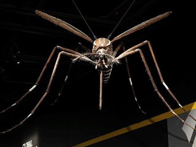 """A giant replica of the Aedes mosquito, a known vector for the disease yellow fever, has been waiting for visitors to return the National Museum of Natural History's """"Outbreak: Epidemics in a Connected World"""" exhibit."""