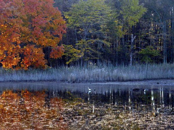 Ghosts of Bear Swamp Pool thumbnail