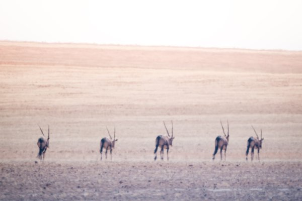 Oryx Formation thumbnail