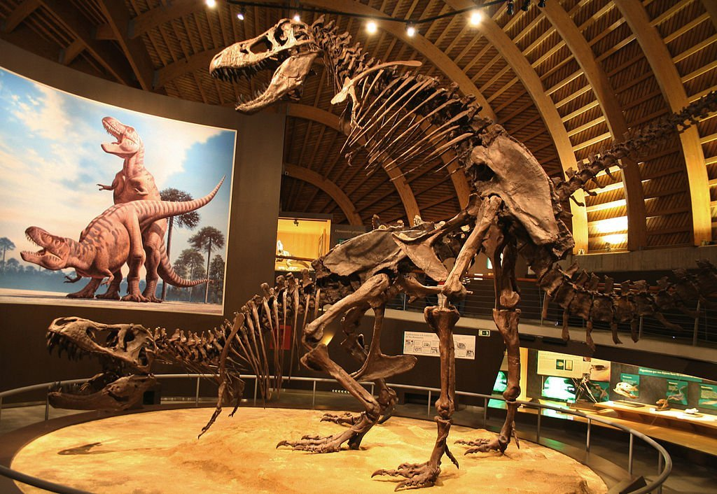Five Things We Don't Know About Tyrannosaurus Rex