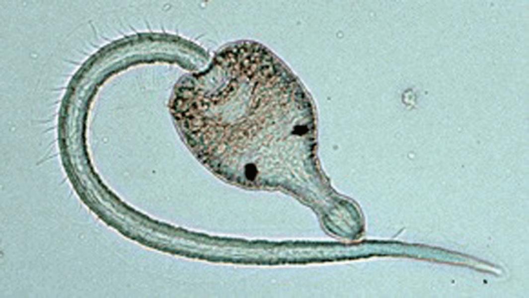 In Praise of Parasites