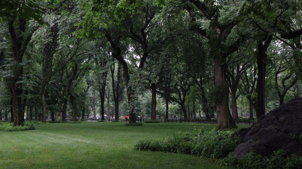 Trees of Central Park thumbnail