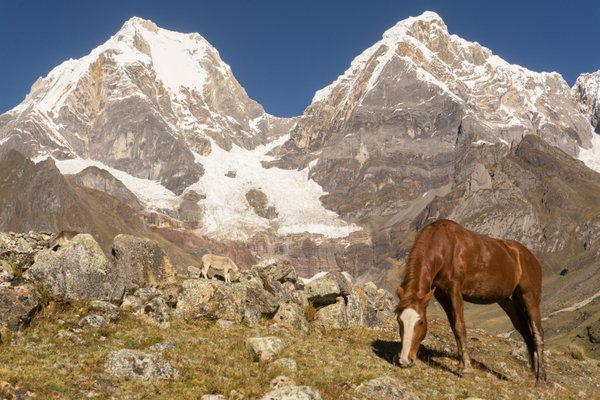 A Horse and the Yerupaja thumbnail