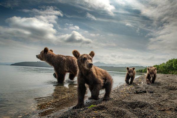 Bear Family of Kamchatka thumbnail