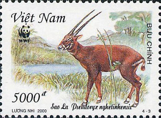 A Wildlife Mystery in Vietnam
