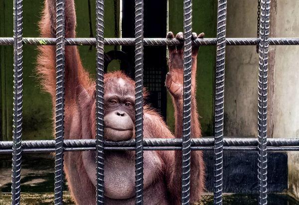 Innocent prisoner thumbnail