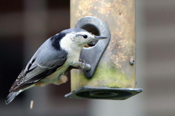 A bird on a feeder thumbnail