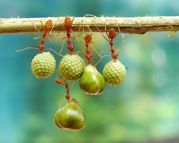 The ants holding and hanging different plants' seeds thumbnail