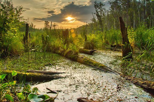 Morning at the swamp thumbnail