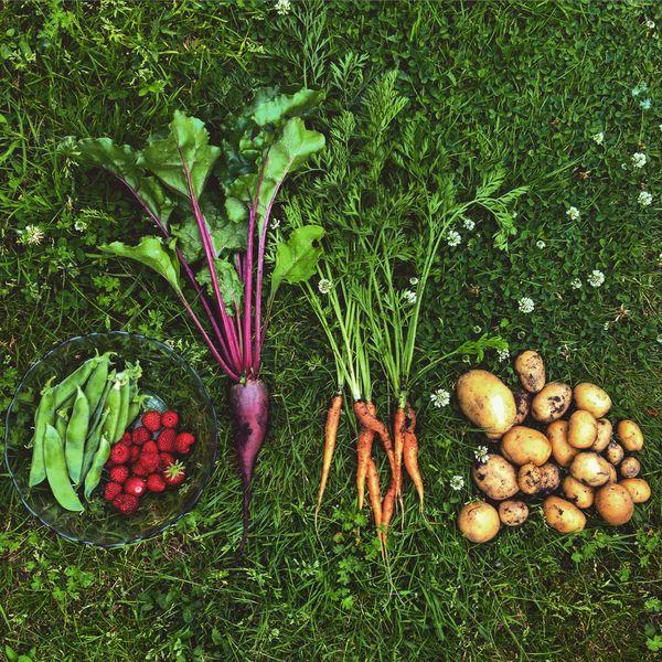 The Harvesting thumbnail