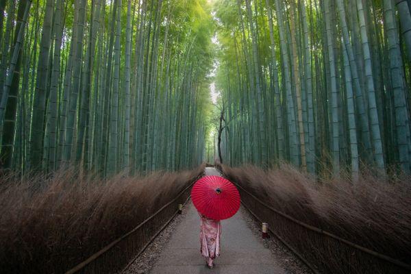 Bamboo Grove 1 thumbnail