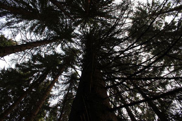 Treescape thumbnail