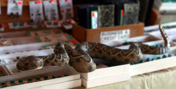 A collection of products made from rattlesnake parts for sale at Rattlesnake Ranch, a Southeastern Arizona novelty shop. thumbnail