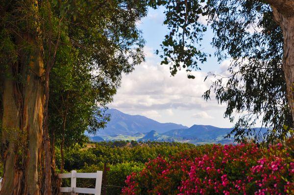 Picturesque farmland in Moorpark, CA. thumbnail