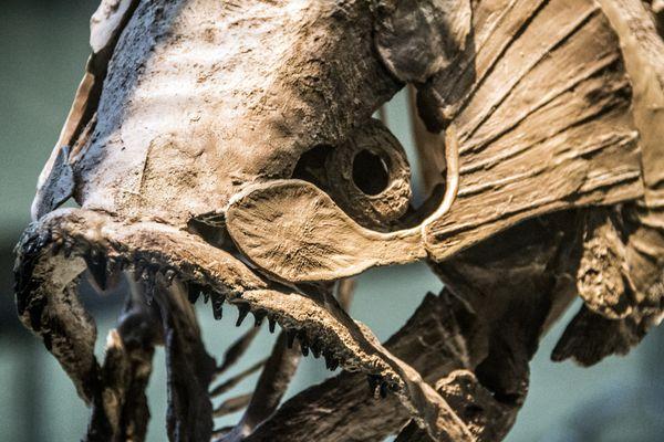 The Big Fossil Fish thumbnail