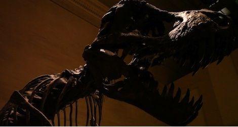 Dino_Thumb.jpg