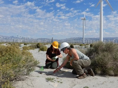 Two researchers observe a bird carcass found at a wind energy facility.