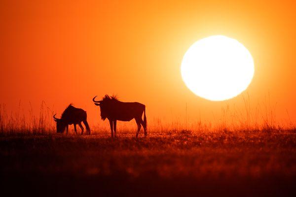Sunset on Liuwa Plain thumbnail