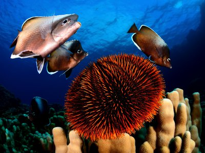 Easter Island is home to at least 142 endemic species, including the Easter Island butterfly fish.