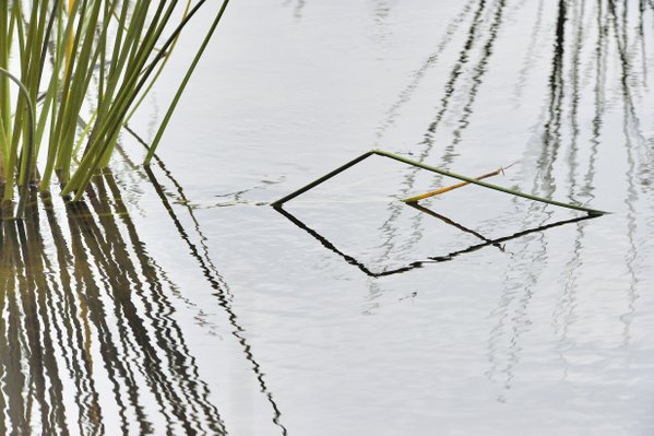 Nature's geometry thumbnail