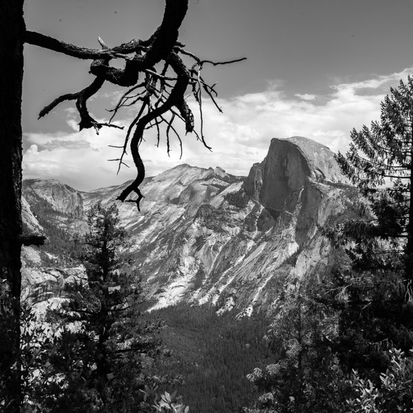 Half Dome with tree. thumbnail