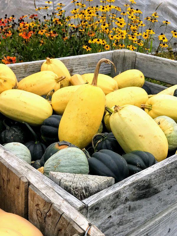 Squash or Gourd? thumbnail