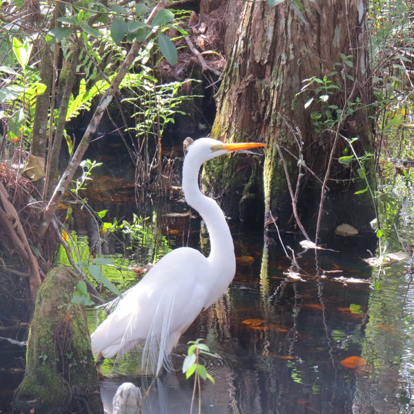 Perfection in the Everglades thumbnail