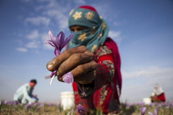 sufferon flower thumbnail