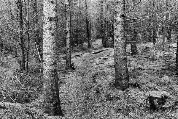 Pine Needles Forest Path thumbnail