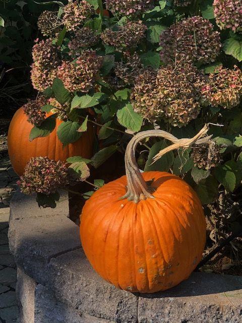 Glowing fall pumpkins of New England thumbnail