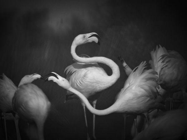 Bird Ballet thumbnail