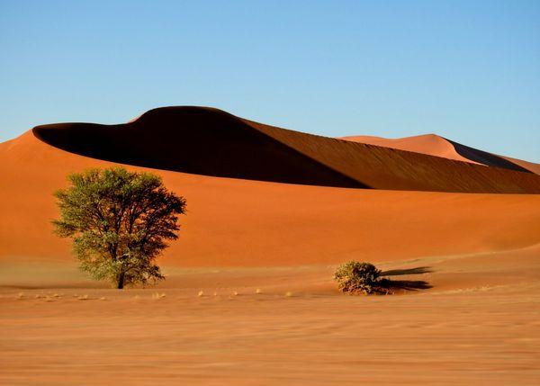 The heart of the desert thumbnail