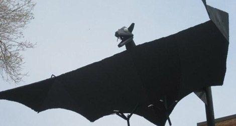 The Bat in Belfry