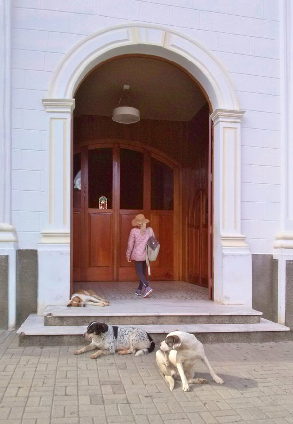 A woman enters the dark church, and dogs rest by the door. But for poetry ... thumbnail